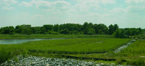 Marsh countryside