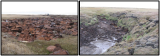 Before and after cleanup at Qiqu, 2009.